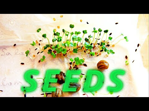 How to grow seeds with water.
