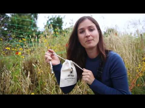 How to save your wild flower seeds with Hannah Grows