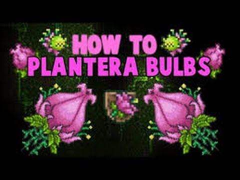 Terraria how to find plantera bulb