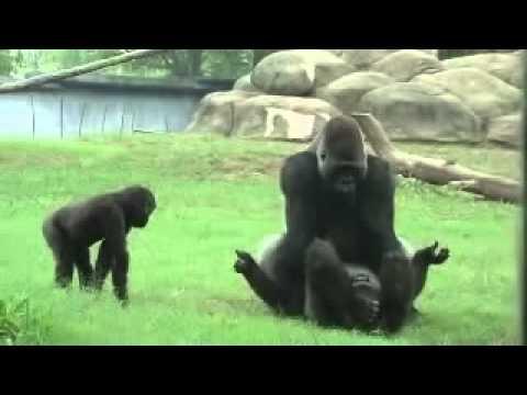 Xxx Mp4 Odia Sexy In Love At Baranga Zoo 3gp Sex