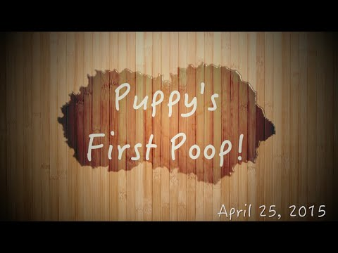 Puppy's First Poop! - Newborn Chihuahua