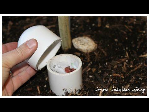 Self-Fertilizing Compost Worm Clementine Tree