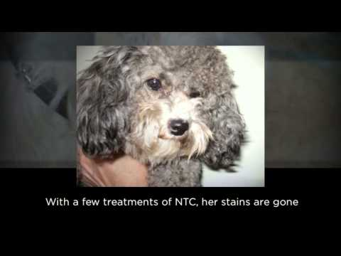 Naturally Tearfree Canine Video