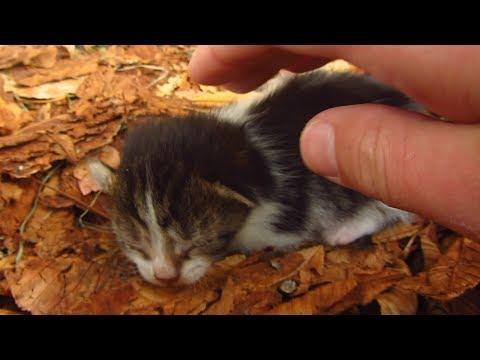 Cat gave birth to a kitten under a chestnut tree