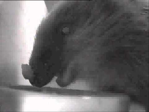 Hedgehog Street: make your own hedgehog feeder. By Ron Wall.