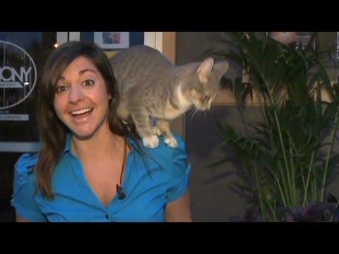 Cat climbs reporter on air