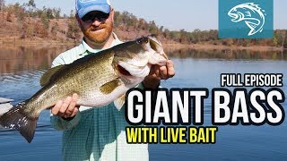 GIANT BASS with LIVE BAIT - COMMANDER LIFE - FULL EPISODE
