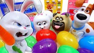 The Secret Eggs of Pets~! Let
