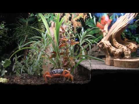 Halloween Crabs 05 16 2010