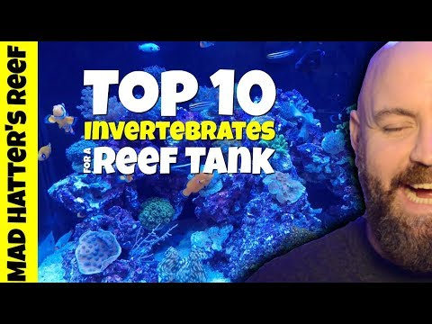 Top 10 Invertebrates for a Reef Tank