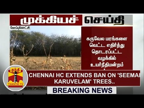 Breaking News : Chennai HC extends ban on removal of Seemai Karuvelam trees | Thanthi TV