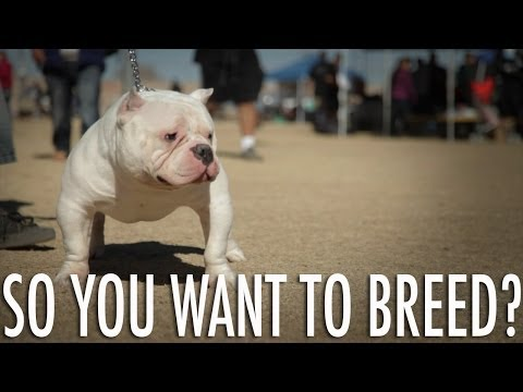 SO YOU WANT TO BREED DOGS?