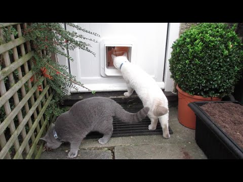 INTRODUCING OUR KITTENS TO THE OUTSIDE (PART 1 - MICROCHIP CAT FLAP) | CHRIS & EVE