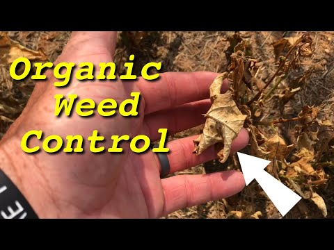 Organic Weed Killer For Gardens