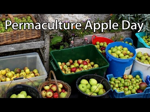 A Permaculture Apple Day at our Farm - Sharing Skills and Produce