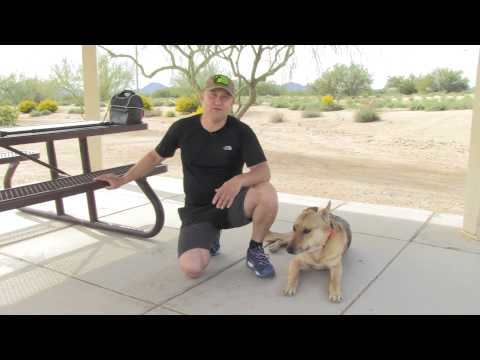 Abel Bailey - Service Dog Training - Update #3