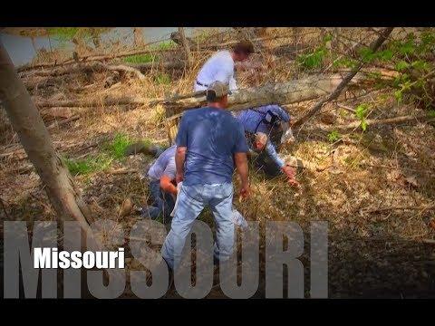 Missouri Morel Mushroom Madness Teaser