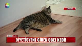 Download Diyetisyene giden obez kedi!