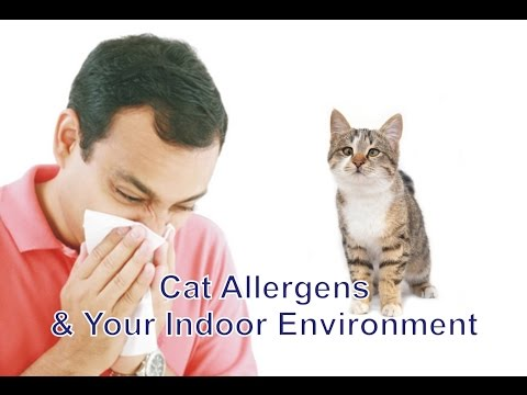 Cat Allergens & Your Indoor Environment
