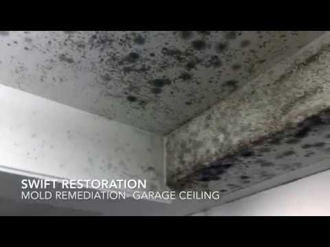Mold remediation- garage ceiling