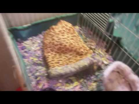 CLEANING MY HEDGEHOG'S CAGE