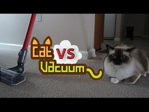 WATCH: Vacuum vs Cat (Too funny!!!)