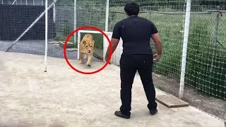สิงโตตัวนี้ไม่ได้เจอเจ้าของมันมากว่า 7 ปี..ดูว่าเกิดอะไรขึ้น