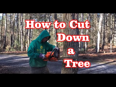 How to Cut Down a Tree - ( 2 mins )