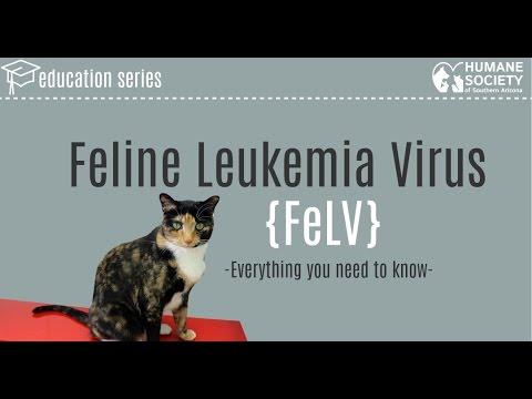 What is Feline Leukemia Virus?