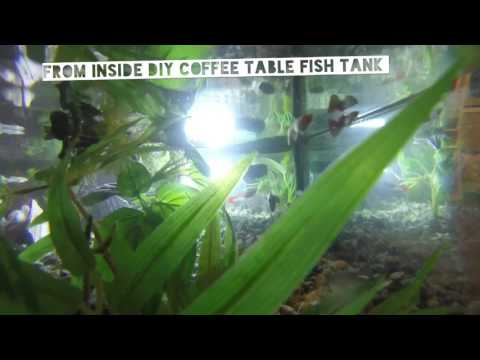 DIY coffee table fish tank restoration