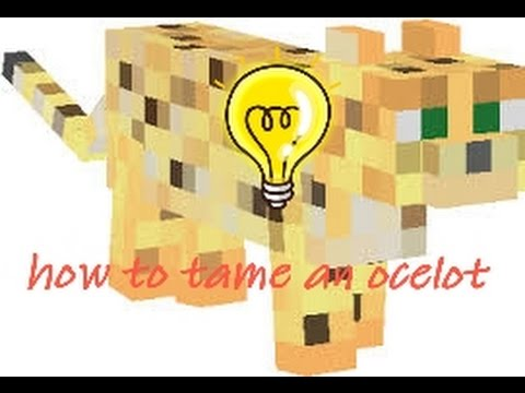 How to tame an ocelot in MINECRAFT PE