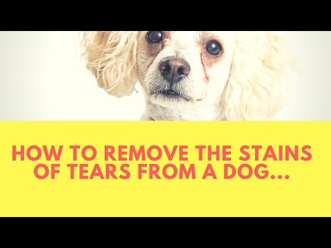 How to Remove the Stains of Tears from a Dog