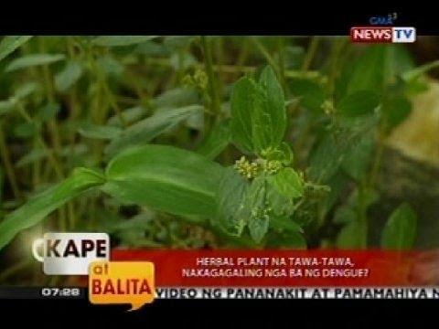 pamanahong papel tungkol sa halamang gamot sa dengue