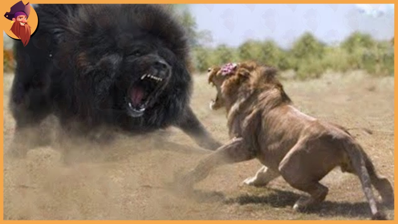 15 Times Land Animals Messed With The Wrong Opponent #2
