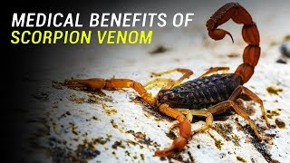 Download Medical Uses of Scorpion Venom Video