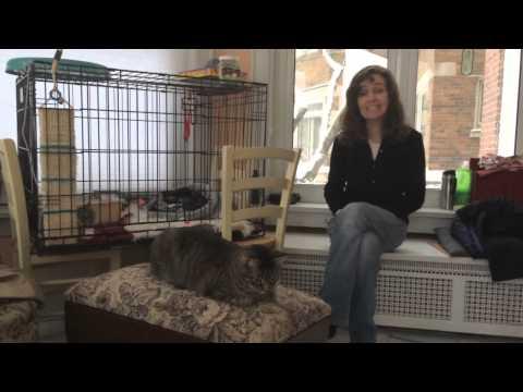 Jezebel, a blind cat in need