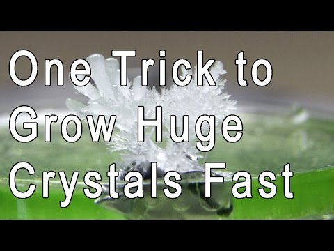 Dansplains Crystal Growing Huge Results