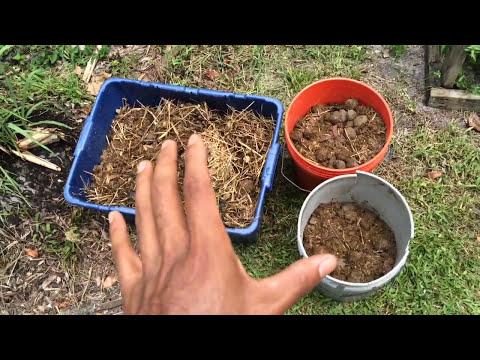 Composting Horse Manure   Plant Nation
