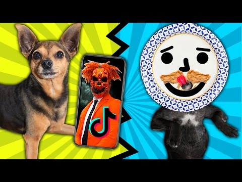 Best Dog Viral Tik Tok Wins $10,000 Challenge! PawZam Dogs