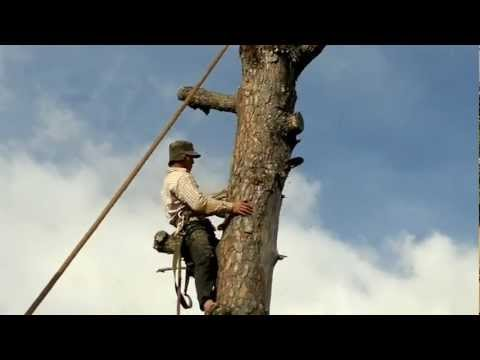 How to cut down ...big-hight tree near house
