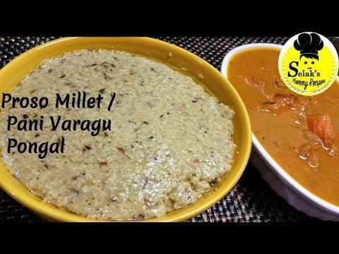 பனிவரகு பொங்கல்  || Proso Millet Pongal ||  Pani Varagu Pongal  ||  Millet Recipes