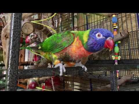 Indoor bird aviary - Grand Designs for a rainbow lorikeet.