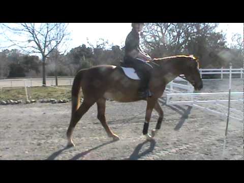 AJ- Walk/trot on hard and soft ground with rider (Dec 27)