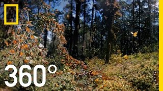 3D Monarch Butterflies in 360° | National Geographic