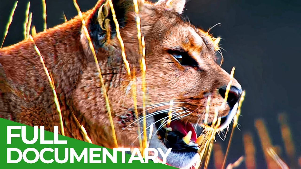 Wild Journey - Chile: Country of Contrasts   Free Documentary Nature