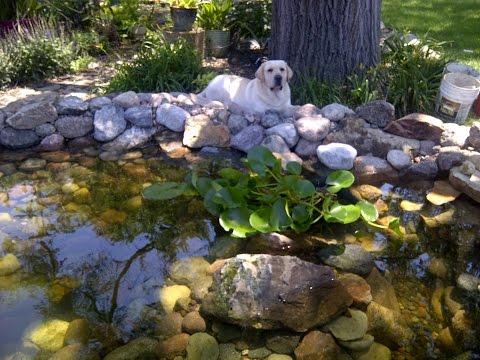 Building a Backyard Koi Pond by Hand
