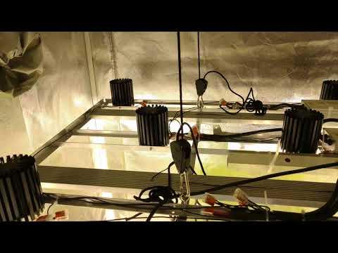 Vero 18 Led Cob Grow light (update)