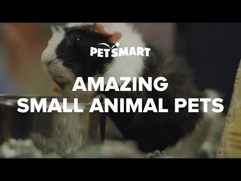 PetSmart's Amazing Small Animal Pets