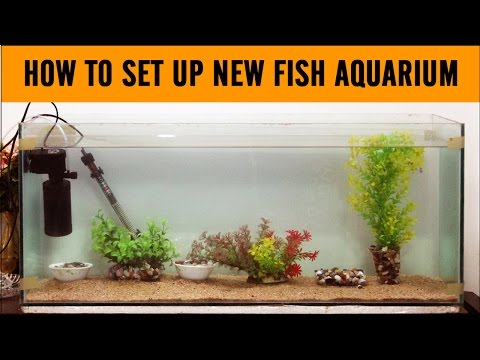 How to set up a new fish aquarium step by step process
