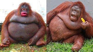 10 Самых Толстых Животных в Мире